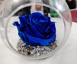 blue rose, colorful, and colors image
