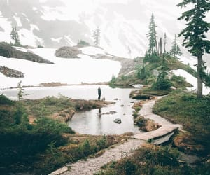 forest, hiking, and wanderlust image