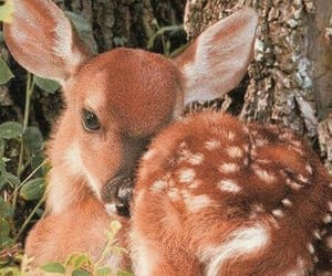 animal and fawn image