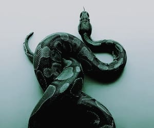 green, snake, and slytherin image