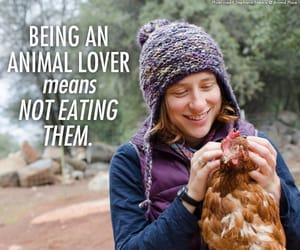 animal, animals, and Chicken image
