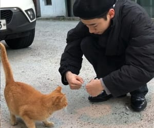 asian, boy, and cats image