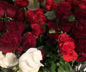 aesthetic, rose, and red image