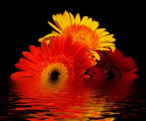 flower and reflection image