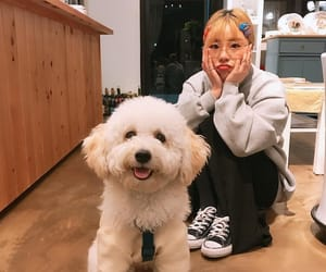 mamamoo, wheein, and dog image