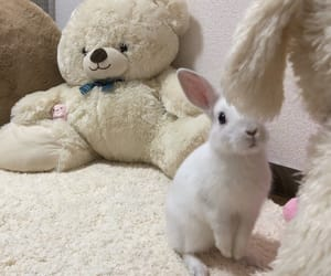 rabbit, white, and うさぎ image