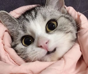 animal, cute cat, and kitty image