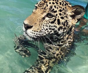 animal, summer, and water image