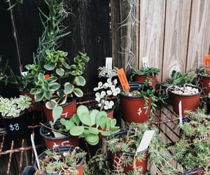 green, house plant, and nursery image