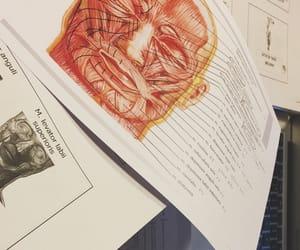 anatomia, anatomy, and med image