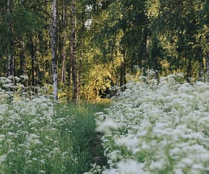 botany, flowers, and forest image
