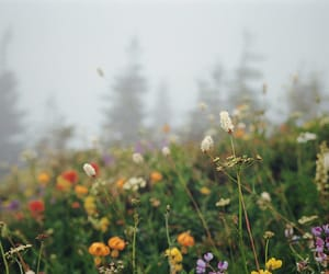 flowers, wildflowers, and fog image