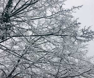 cold, snow, and tree image