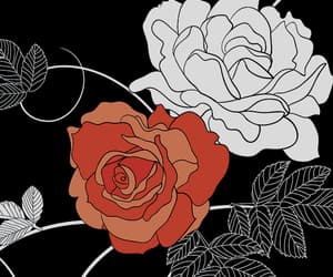 background, rose, and wallpaper image