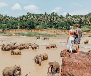 elephant, travel, and couple image