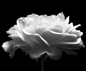 black, floral, and grunge image
