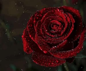 rain, gif, and red rose image