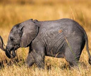 elefante, bebé, and pequeño image