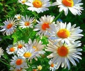 blooming, love flowers, and flowers garden image