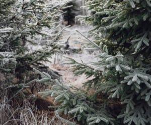christmas, green, and pine tree image