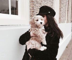 dog, fashion, and cute image