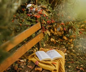 autumn, berries, and book image