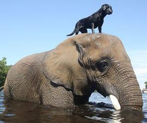 dog, friendship, and elephant image