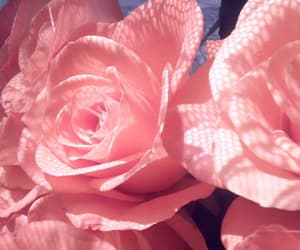 aesthetic, rose, and article image