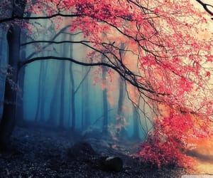 beautiful, trees, and Darkness image