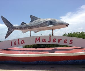 ballena, isla mujeres, and quintana roo image