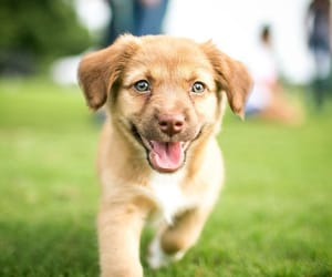 animals, dogs, and pets image