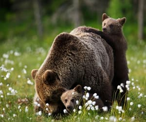 bears, nature, and summer image