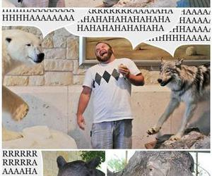 animals, punny, and bear image