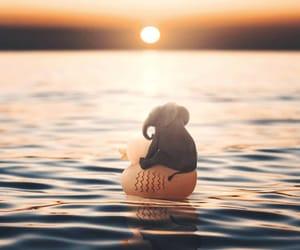 elephant, sunset, and cute image
