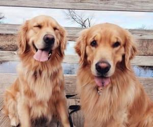 dog, animal, and pets image