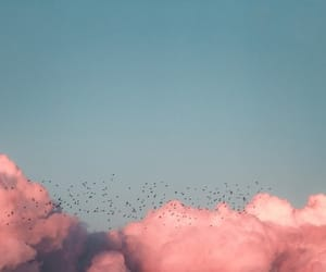 aesthetic, birds, and pink image