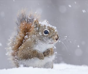adorable, squirrel, and snow image