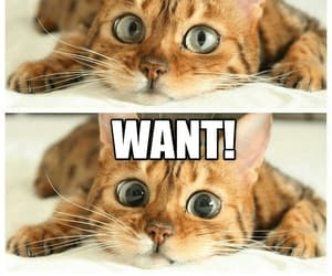 funny cat, kittens, and pupils image