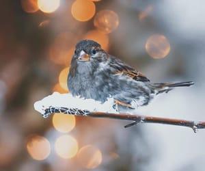 bird, bokeh, and nature image