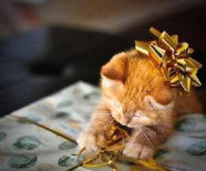 cat, lové, and christmas image