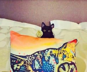 cats, pets, and mascotas image