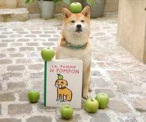 dog, apple, and book image