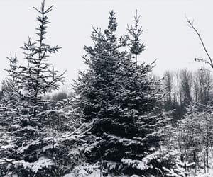 day, snow, and winter image