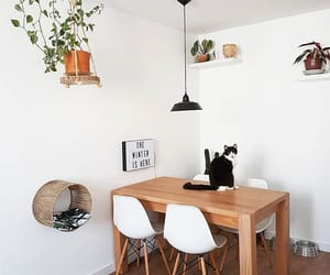 cat, decor, and clean image