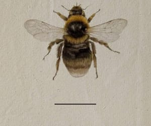 bee, brown, and change image
