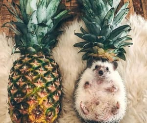 animal, cute, and pineapple image