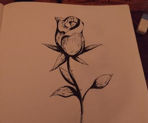drawing, flower, and rose drawing image