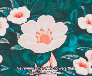 quotes, anime, and aesthetic image
