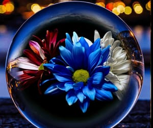 bubbles, reflection, and flower image