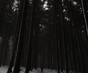 b&w, dark forest, and mine image